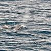 Killer Whales 12-14 - _009