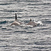 Killer Whales 12-14 - _010