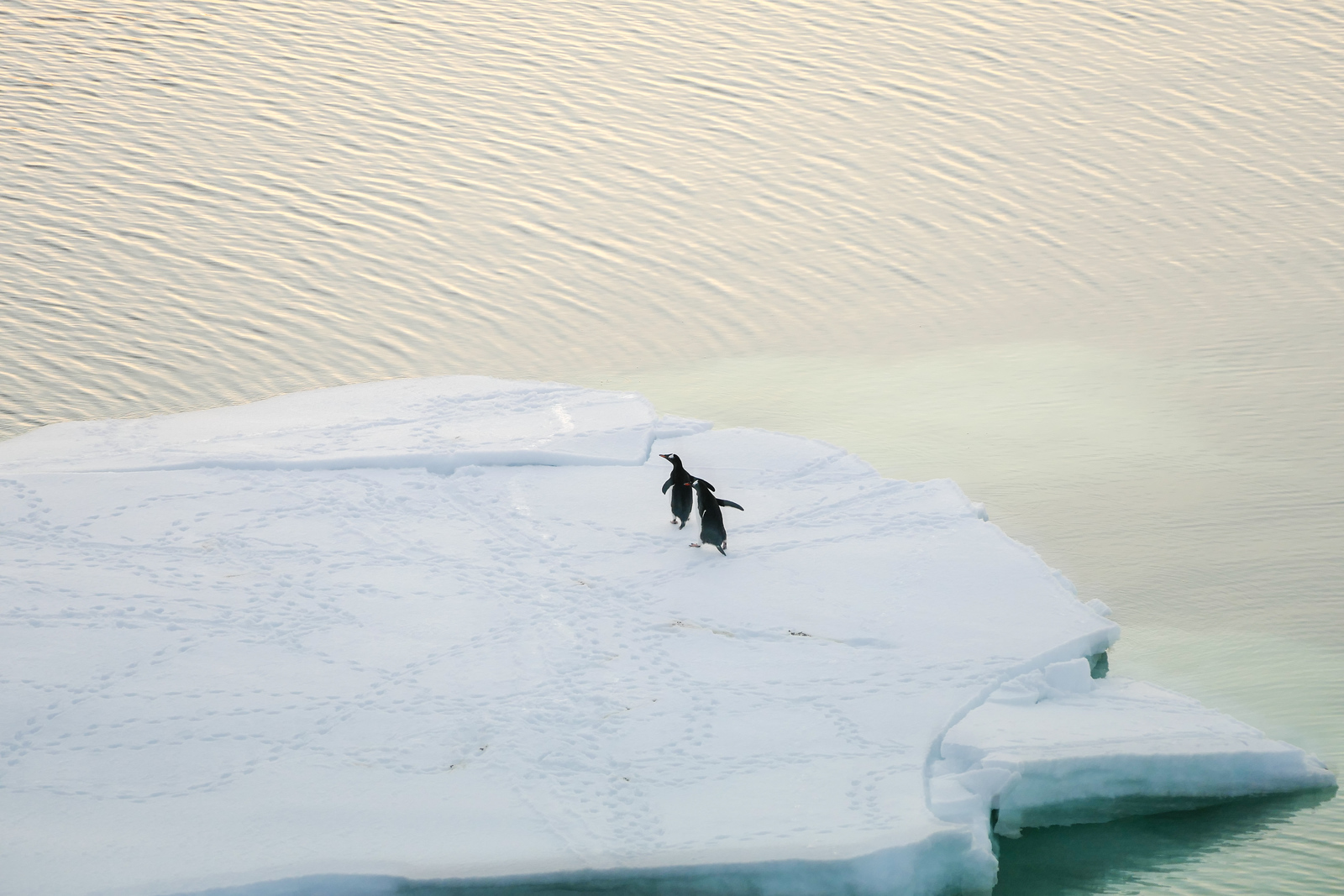 Penguins scurry across an iceberg in Neumayer Channel. It's part of the travel fun on an Antarctica cruise.