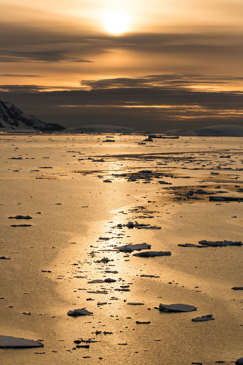A golden sun reflects onto the water of Neumayer Channel. It's part of the beauty of an Antarctica cruise.