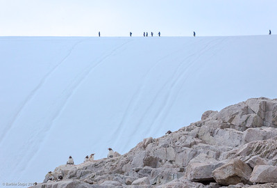 One of our hikes to scenic point at Neko bay - penguins at bottom , people on snow ridge