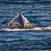 Whales - _008