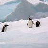 Antarctica - Zodiac Tour 12-13 - _031