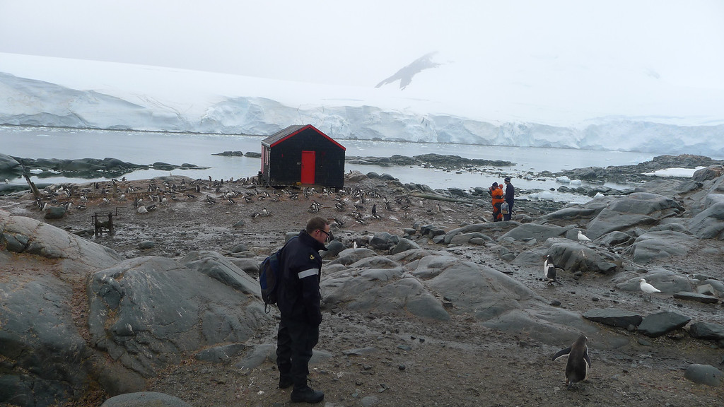 Historic British Base A, Port Lockroy on Goudier Island. <br /> <br /> Royal Navy visitor checks out the Penguins.