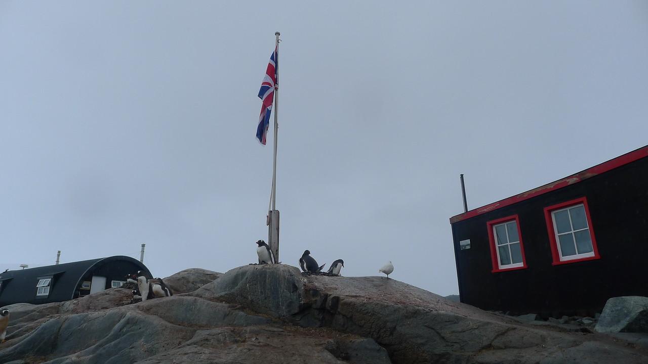 Historic British Base A, Port Lockroy on Goudier Island.   Penguins around the flag poll.