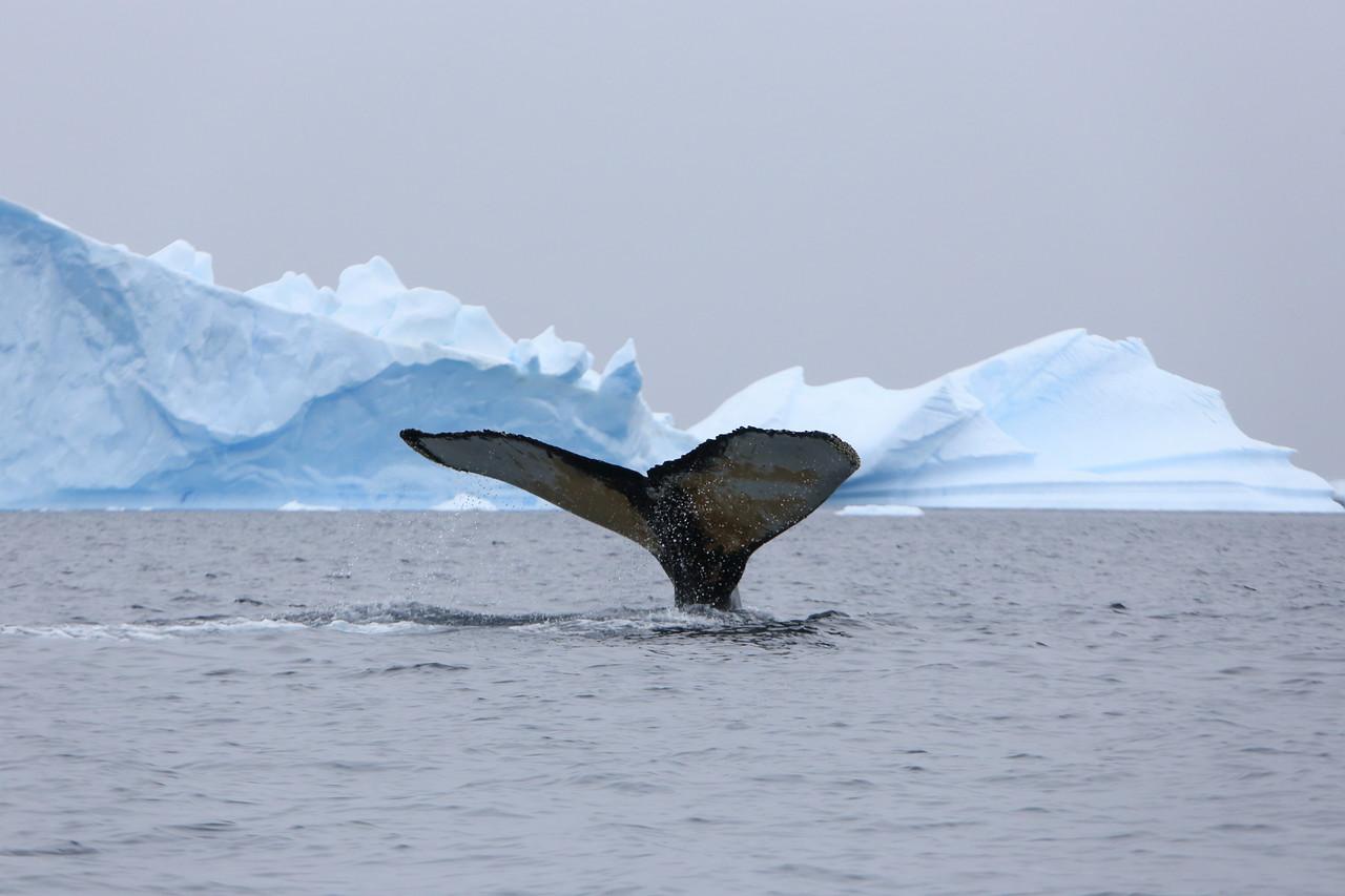Whale in the Penola Strait