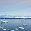 Cuverville Island - _018
