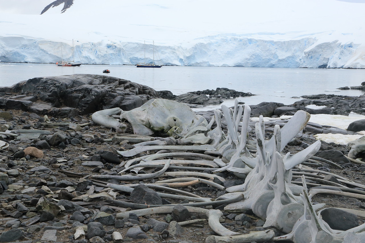 Whale bones at Port Lockroy