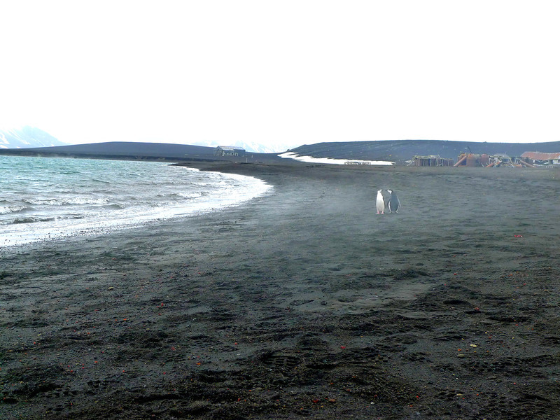 Deception Island, Whalers bay,  two penguins stop to chat, volcanic beach, with a mist rising from the hot water below the surface.