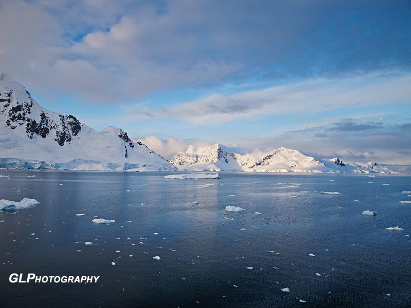 Cuverville Island - _001