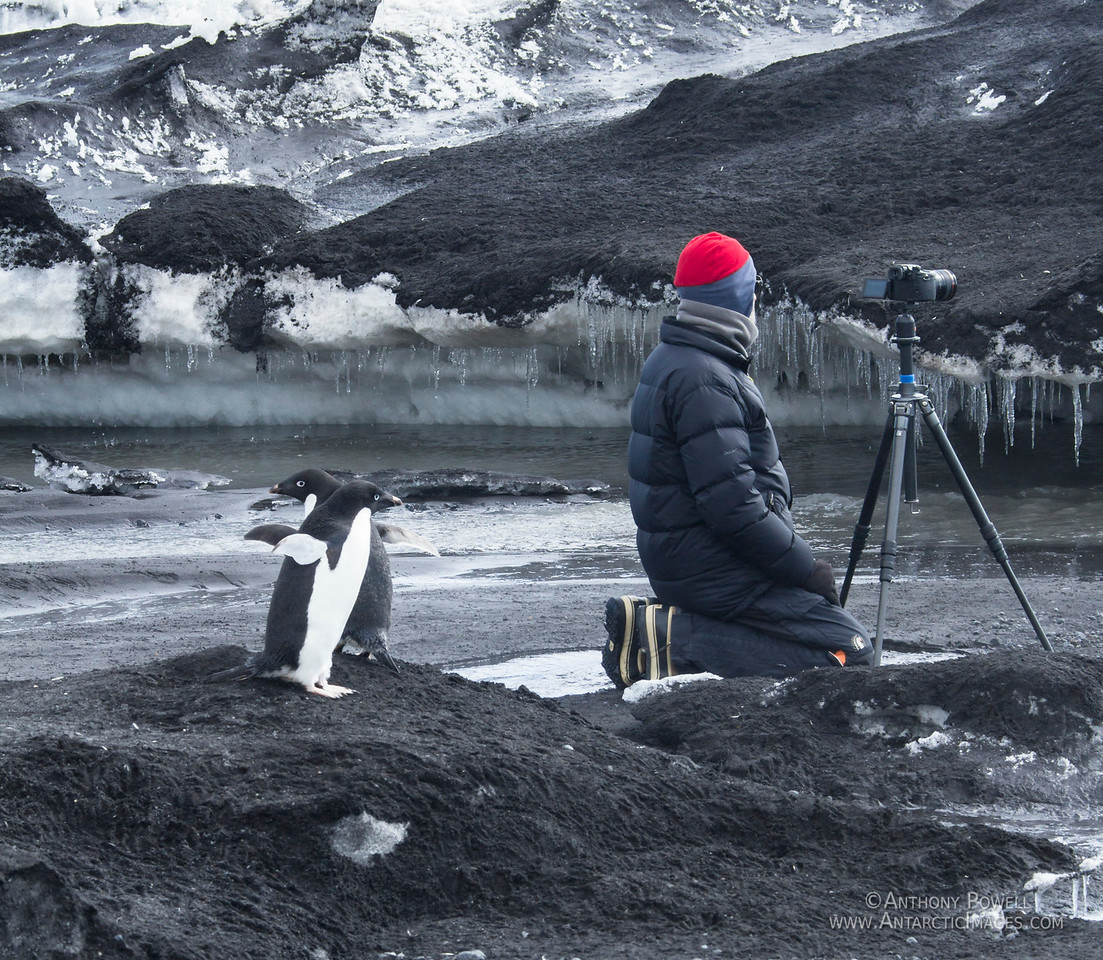 How not to photograph penguins