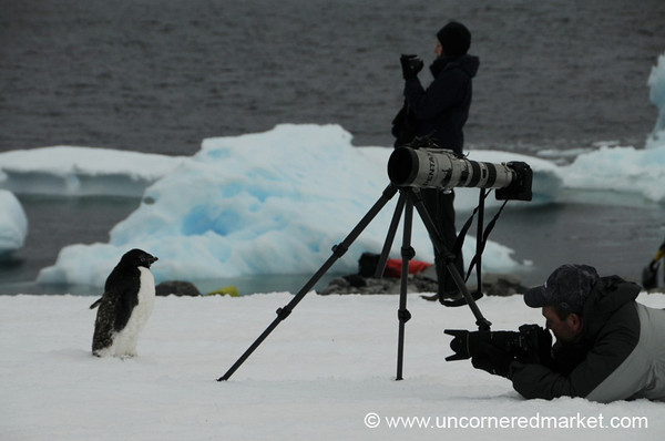 National Georgraphic Photographer at Work - Prospect Point, Antarctica