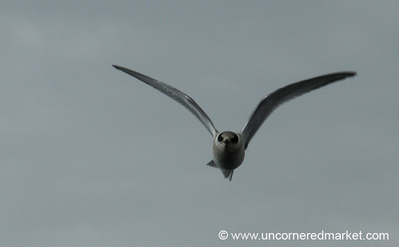 Seabird on the Go - Antarctica
