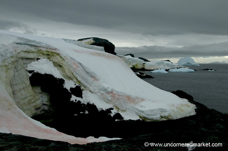 Colorful Ice - Antarctica