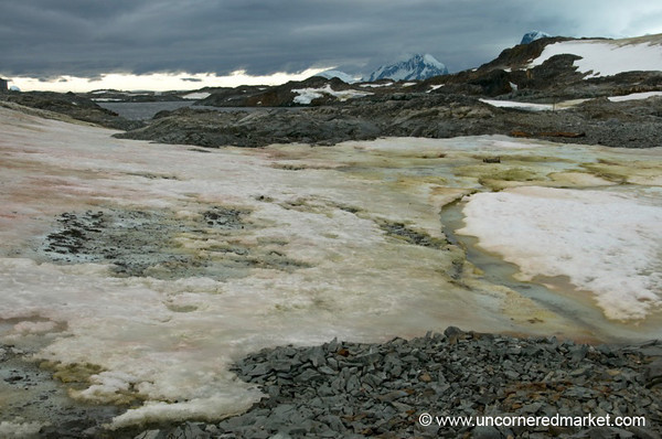 Green and Pink Ice - Antarctica