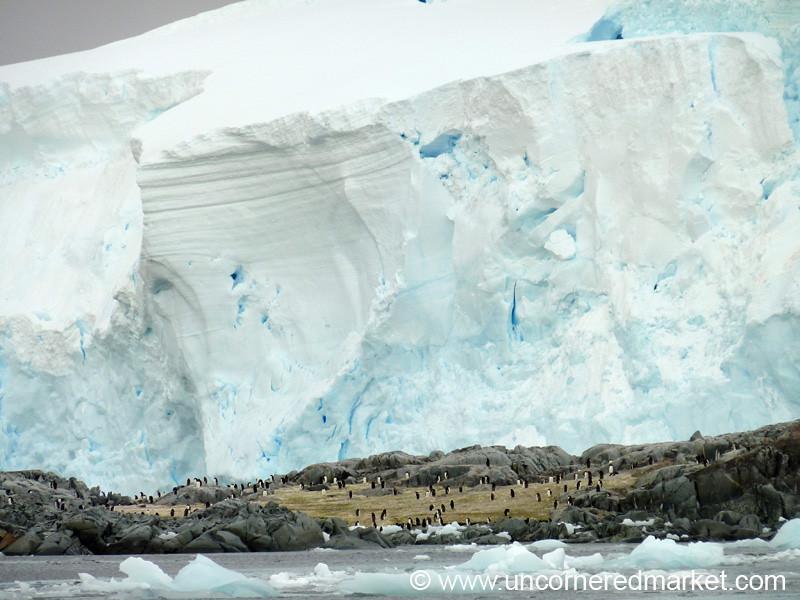 Penguins in the Shadow of the Glacier - Antarctica