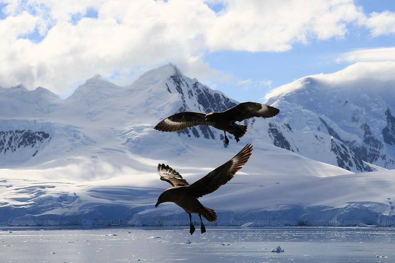 CRay-Antarctica-7081