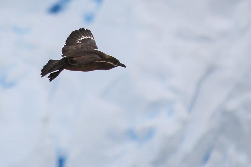 CRay-Antarctica-2878