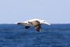 CRay-Antarctica-4243