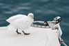 CRay-Antarctica-3748