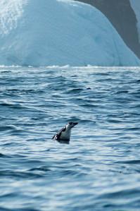 Half a Porpoise