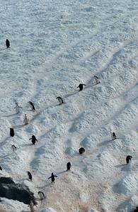 Penguin Moguls