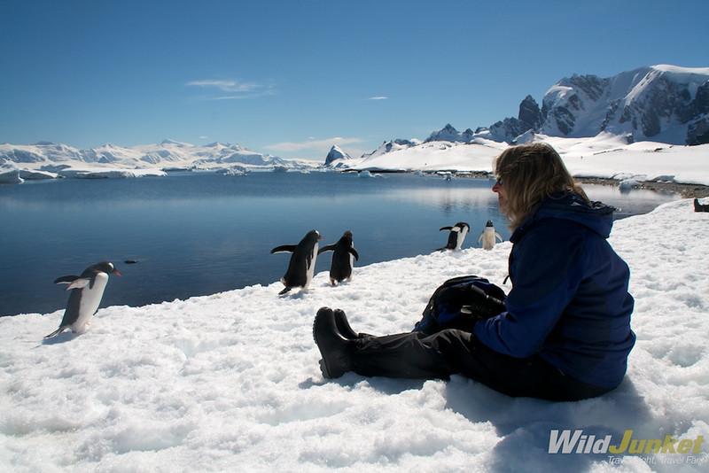 南极洲的哺乳动物:南极洲,还有很多,还有很多!