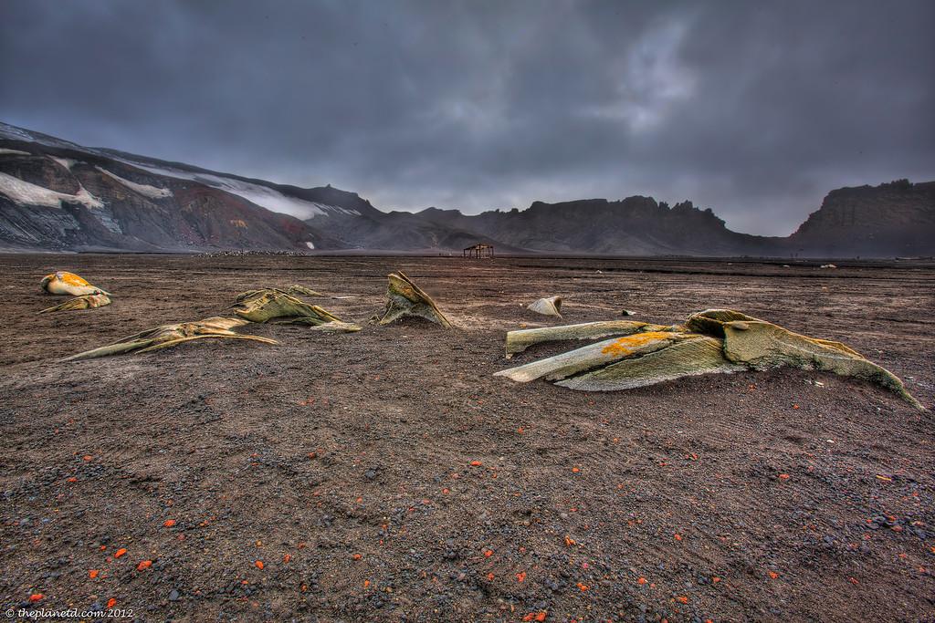 Deception-island-antarctica-whale-bones