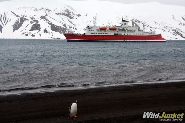 A penguin on the beach of Deception Island