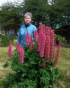 Ushuaia, Argentina: Lupins are one of the most abundant flowers in Ushuaia; you can find them in every garden and park.