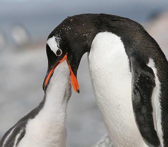 Favorites - Quest for Antarctica