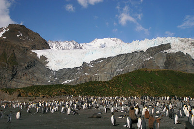 Our landing beach is crowded with king penguins, elephant seals, and fur seals.  There are some gentoos roaming around too.