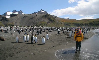 Keeping company with the king penguins at Gold Harbour.