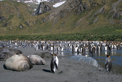 This is one of the inland bodies of shallow water.  Penguins seem to like standing in the water; I wonder if it helps them regulate their body temperature.