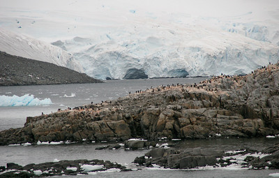 Gentoo colony on Goudier Island.