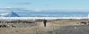 Cape Bird penguin colony looking north