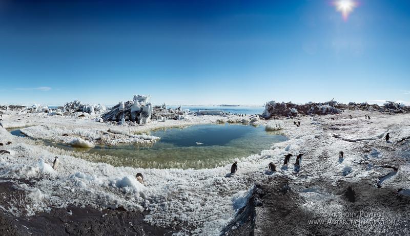 Bird Shore Pond Giga