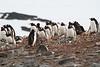 CRay-Antarctica-2673