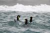 CRay-Antarctica-3790