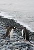 CRay-Antarctica-6954