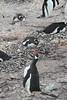CRay-Antarctica-2858