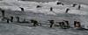 CRay-Antarctica-3798