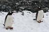 CRay-Antarctica-6962