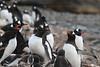 CRay-Antarctica-2642