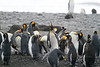 CRay-Antarctica-3879