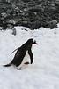 CRay-Antarctica-6970