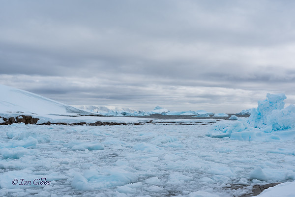 Crowded Bay of Ice