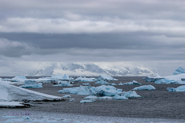 Blue Icebergs and White Mountains #3