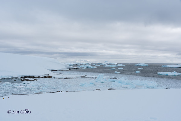 Blue Icebergs and White Mountains #4