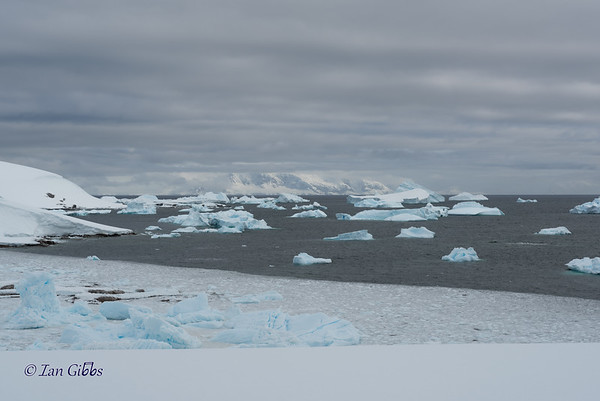 Blue Icebergs and White Mountains #2